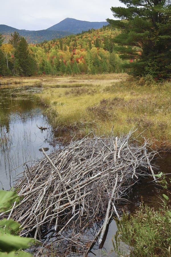秋叶和海狸小屋斯特拉顿溪池塘的,缅因 库存图片