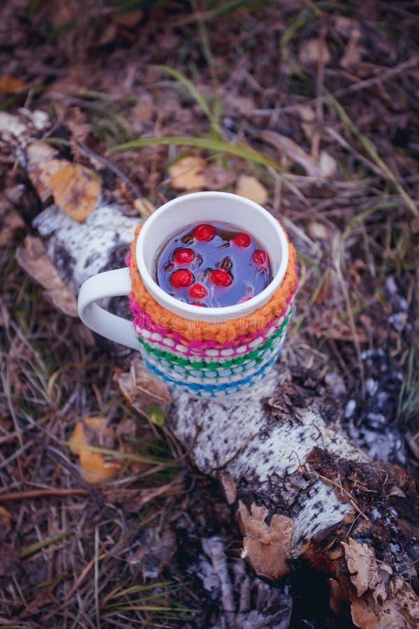 秋叶和热的通入蒸汽的杯子清凉茶用在羊毛外套的莓果 秋季、业余时间和茶时间打破概念 免版税库存图片