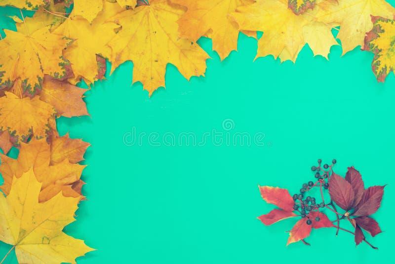 秋叶和狂放的葡萄 免版税图库摄影