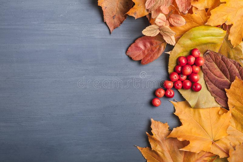 秋叶和莓果在木背景 免版税库存照片