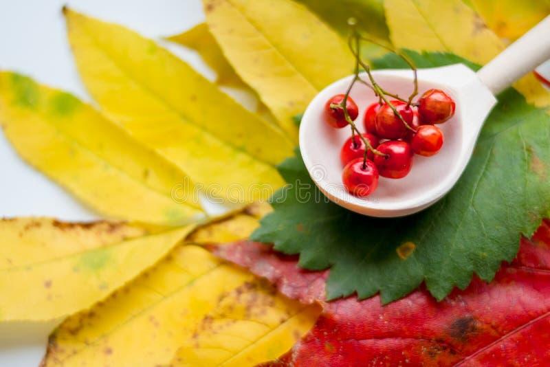 秋叶和说谎在一张老木桌上的花楸浆果 仍然1寿命 秋天感恩静物画 万圣节 免版税库存照片