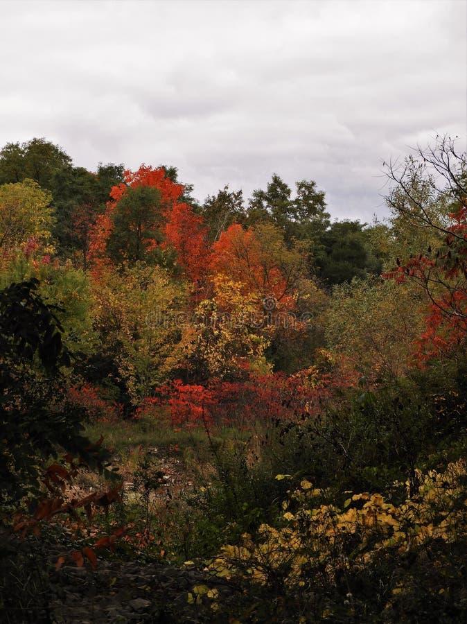秋叶在一多云天 库存图片