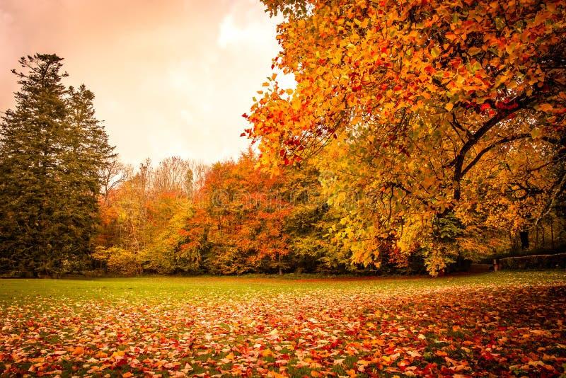 秋叶在一棵树下在公园 图库摄影
