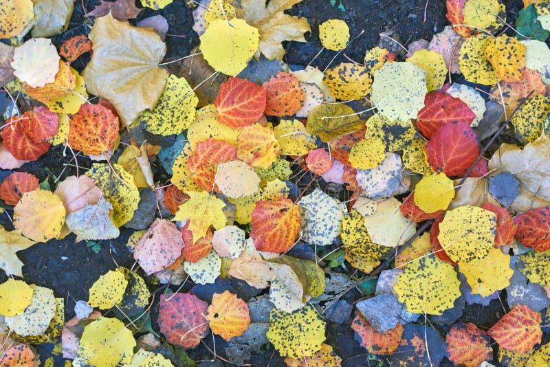 秋叶在公园 库存照片
