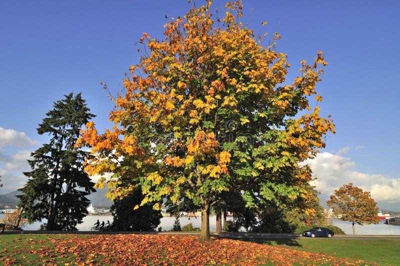 秋叶在公园 免版税图库摄影