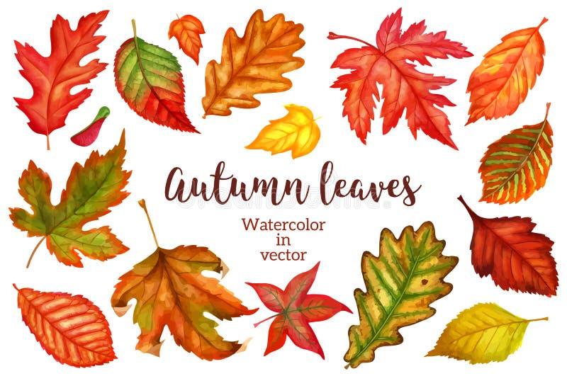 秋叶在白色背景的水彩 也corel凹道例证向量 皇族释放例证