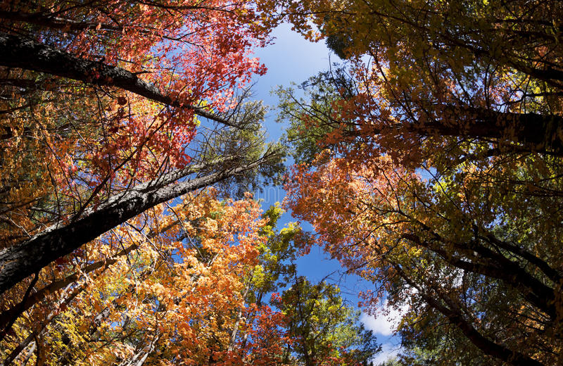 秋叶在美国独立纪念日峡谷的变动颜色在新墨西哥 库存照片