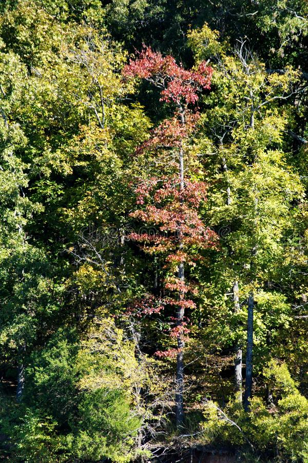 秋叶在肯塔基 图库摄影