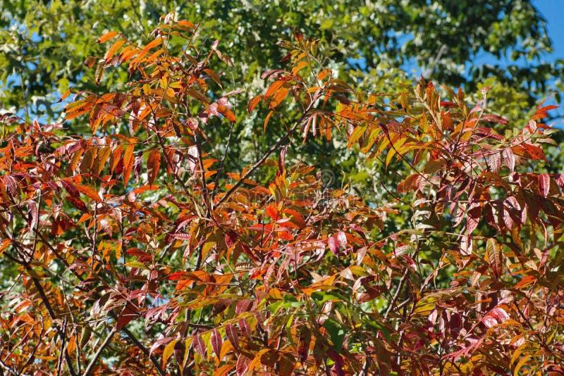 秋叶在肯塔基 库存图片