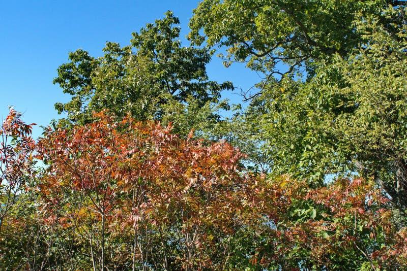 秋叶在肯塔基 免版税图库摄影