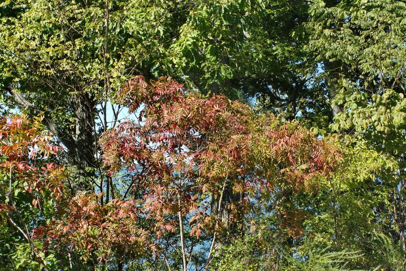 秋叶在肯塔基 库存照片