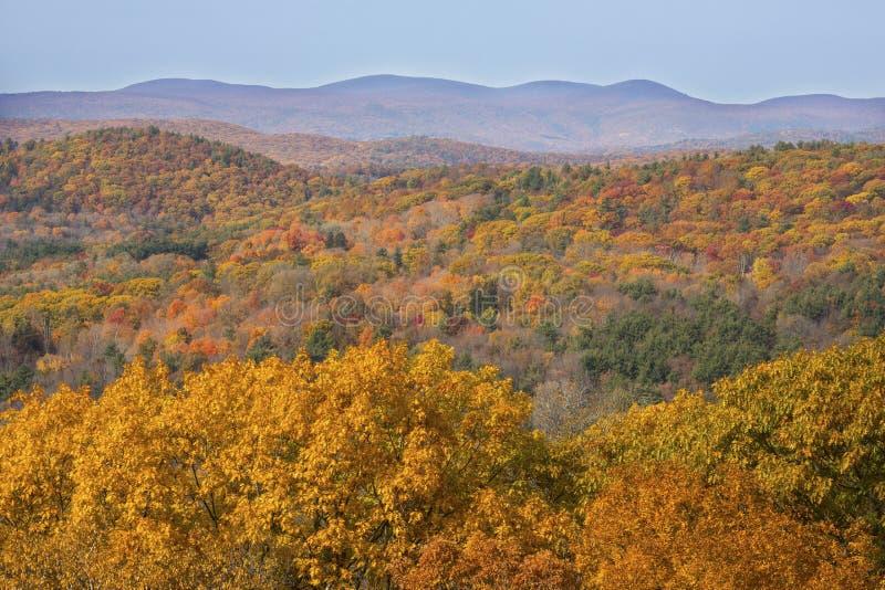 秋叶在西康涅狄格森林,从莫霍克族Mounta 免版税图库摄影