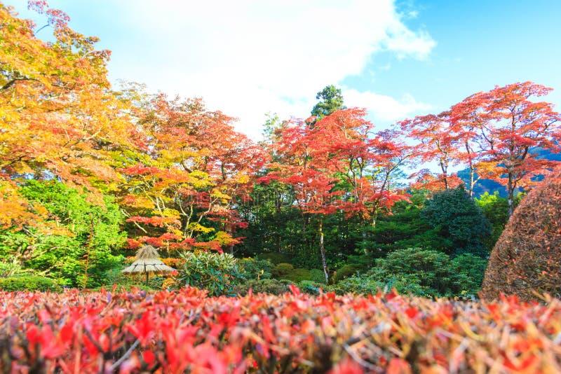 秋叶在Shoyo en日本庭院日光,日本里 免版税库存照片
