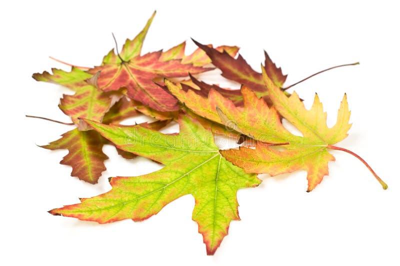 秋叶堆  免版税图库摄影