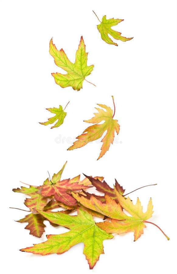 秋叶堆  免版税库存照片