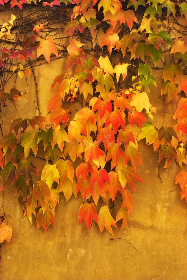 秋叶墙壁 免版税库存照片
