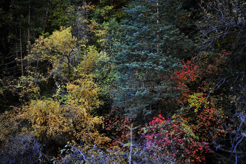 秋叶彩虹在锡安国家公园 免版税库存照片