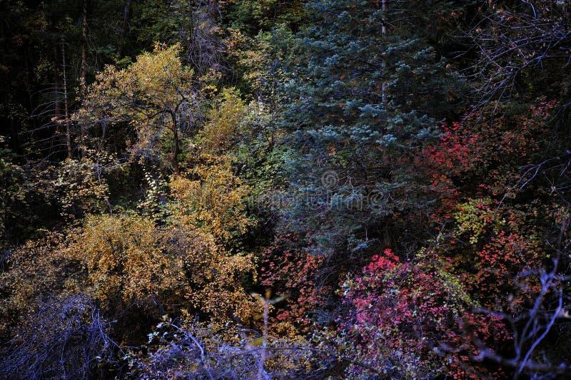 秋叶彩虹在锡安国家公园 库存照片