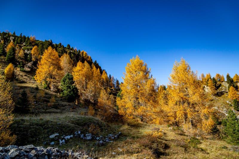 秋叶徒步前往蒙泰卡斯特拉兹 免版税库存照片