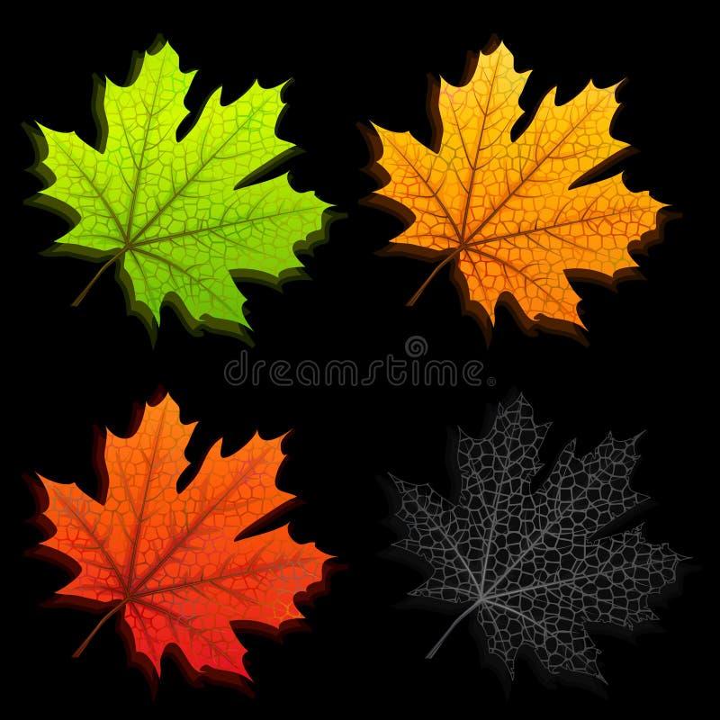 秋叶槭树 向量例证