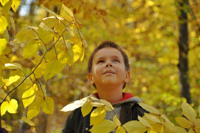 秋叶的孩子 免版税图库摄影
