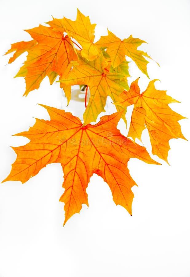 秋叶的枝杈在花瓶的 免版税图库摄影