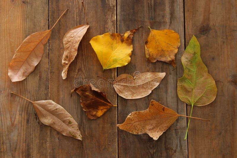 秋叶的顶视图图象在木织地不很细背景的 库存照片