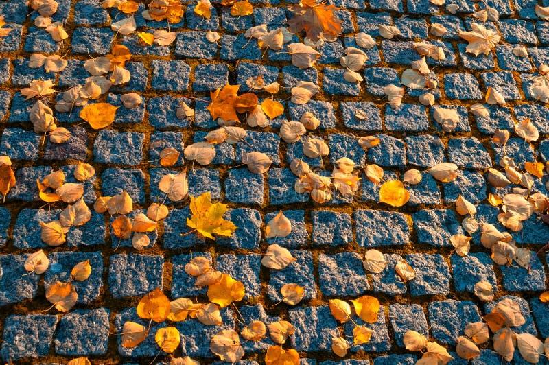 秋叶背景 在织地不很细石路面的下落的橙色秋叶 库存图片