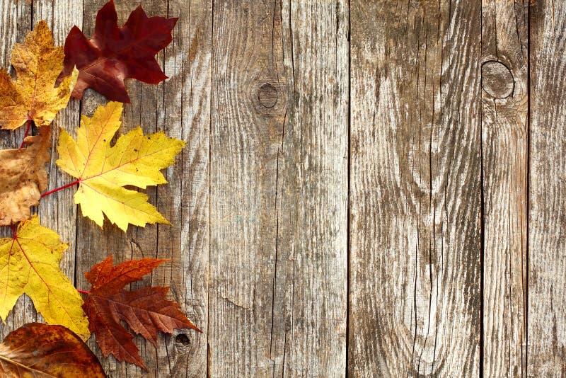 秋叶边界 图库摄影