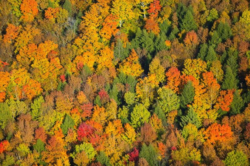 秋叶鸟瞰图在佛蒙特。 免版税图库摄影