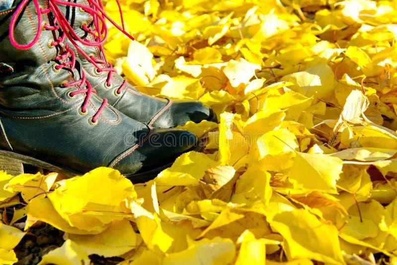 秋叶 在秋天期间,走在街道上的妇女死者充分离开 库存图片