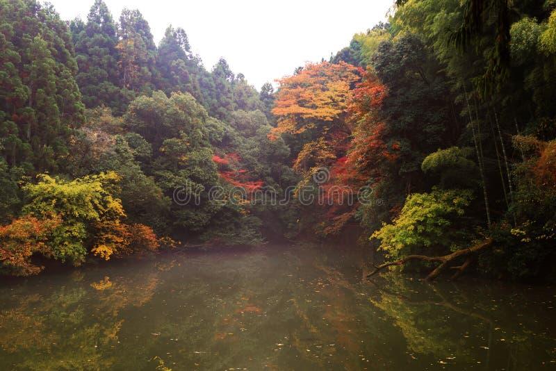 秋叶临近池塘,京都 免版税库存照片