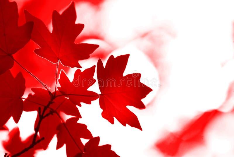 秋叶 免版税图库摄影