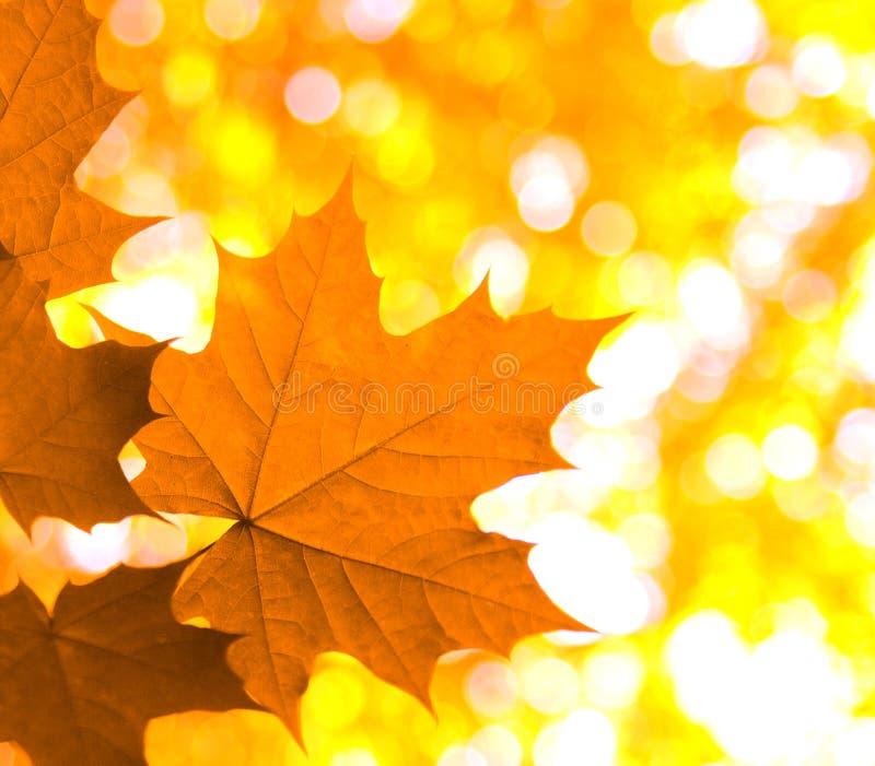 Download 秋叶 库存照片. 图片 包括有 照亮, 本质, 橙色, 特写镜头, browne, 模式, 自然, 季节 - 15683094