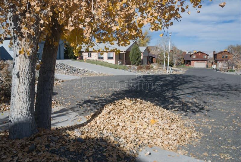 Download 秋叶 库存照片. 图片 包括有 季节性, 结构树, 季节, 11月, 郊区, 自治权, 街道, 叶子, 划分为 - 3660402