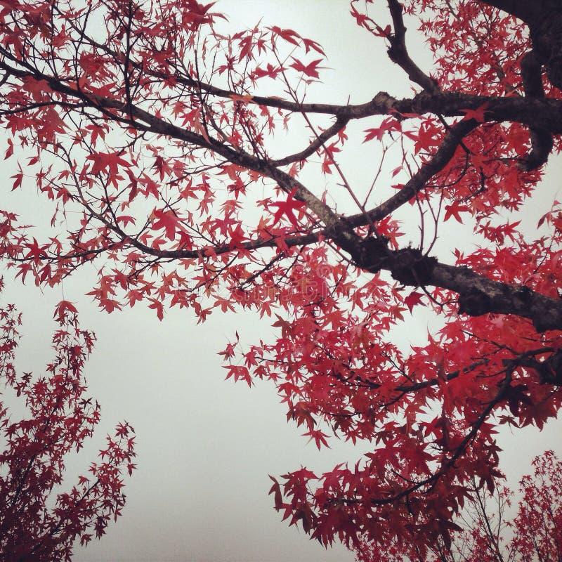 秋叶 免版税库存图片