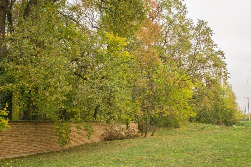 秋天、秋天风景、树与绿色和黄色叶子, gr 免版税库存照片