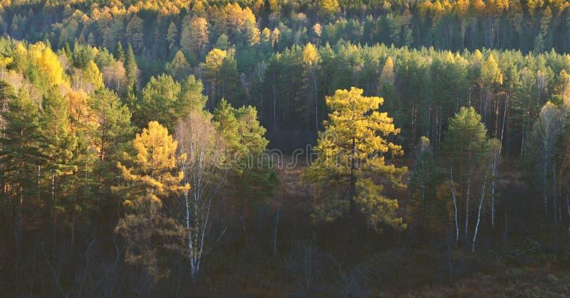 秋天一个风景森林的风景全景 免版税图库摄影