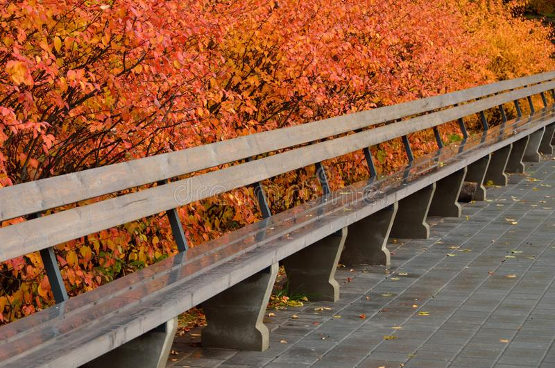 秋天上色了与明亮的叶子和长木凳的灌木 免版税库存图片