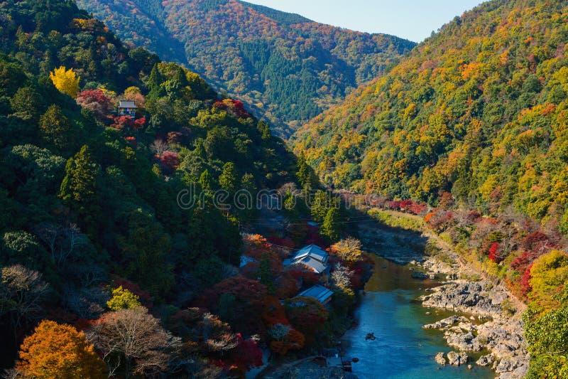 秋天上色了沿Katsura河的森林京都,在秋天期间的日本的Arashiyama零件的 图库摄影