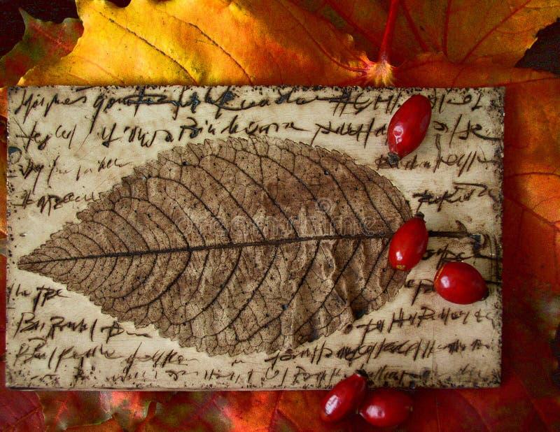 秋天上色山楂树叶子 免版税库存图片