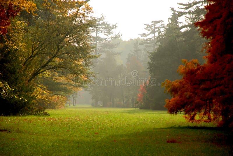 秋天上色有雾的森林 免版税库存照片