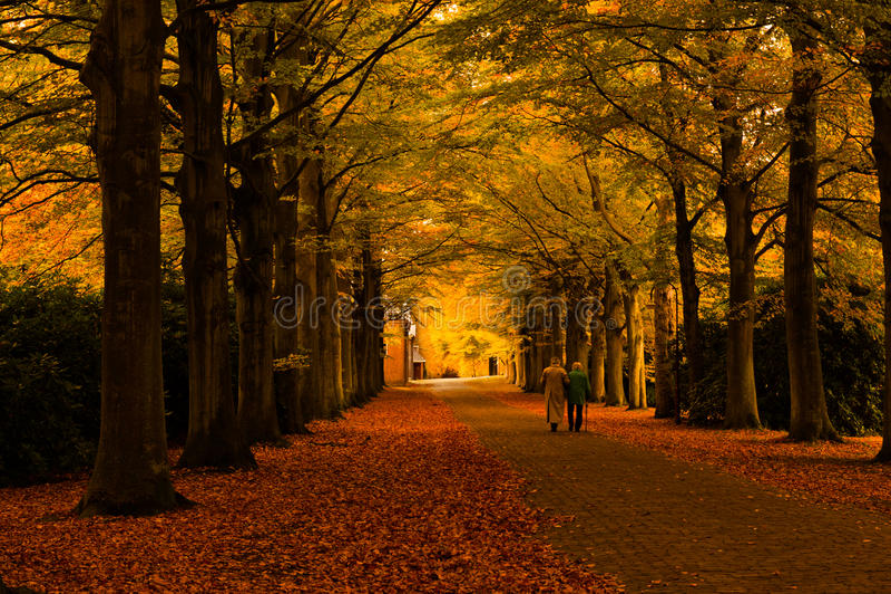 秋天上色森林 库存照片