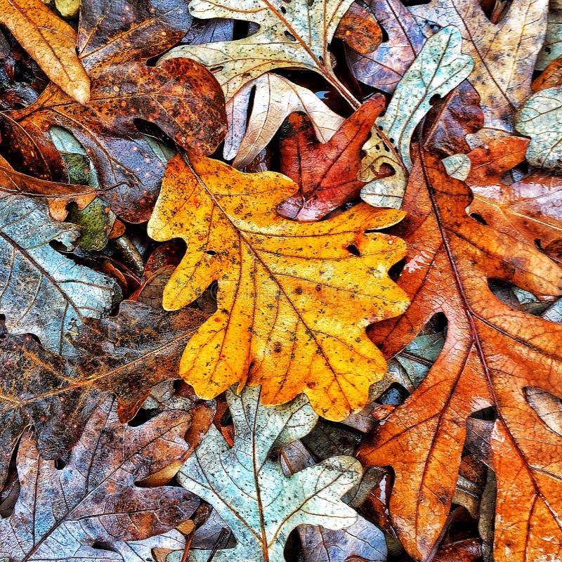 秋天上色汇集 库存图片