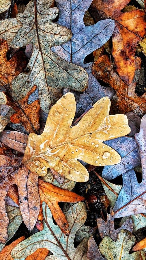 秋天上色汇集 库存照片
