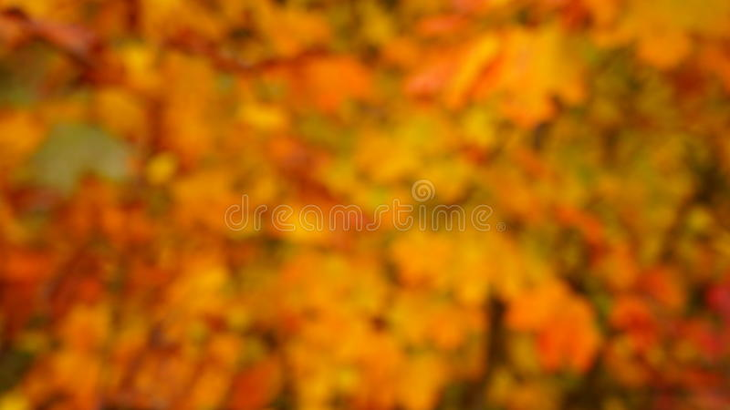 秋天上色背景 免版税库存图片