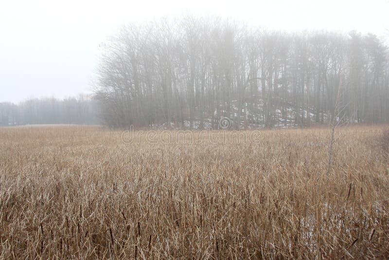 秋天上色草延迟沼泽薄雾细微 免版税图库摄影