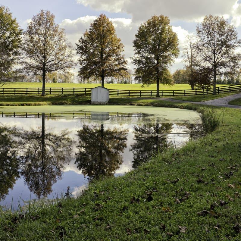 秋天下午农厂池塘 免版税库存图片