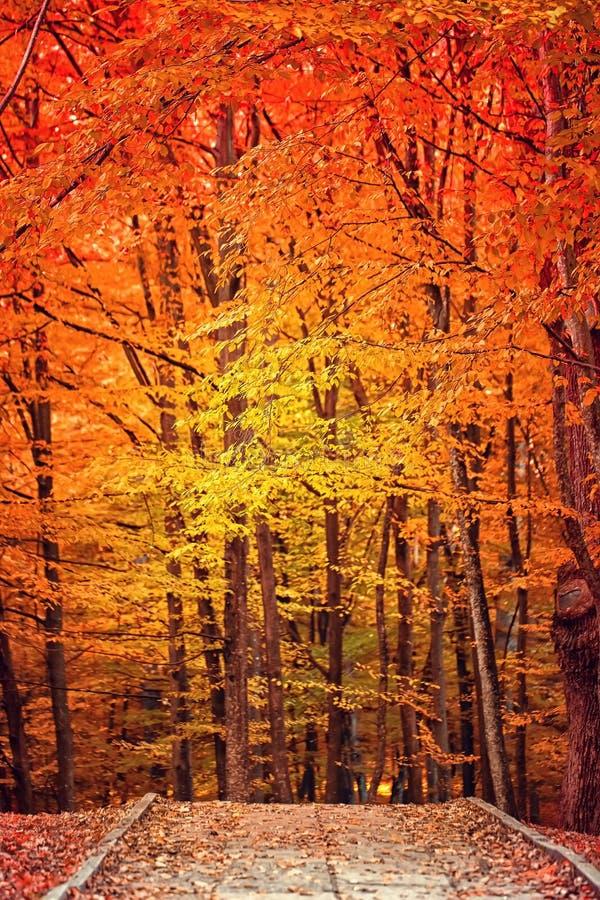 秋天下来划分为的叶子横向草坪公园 库存照片