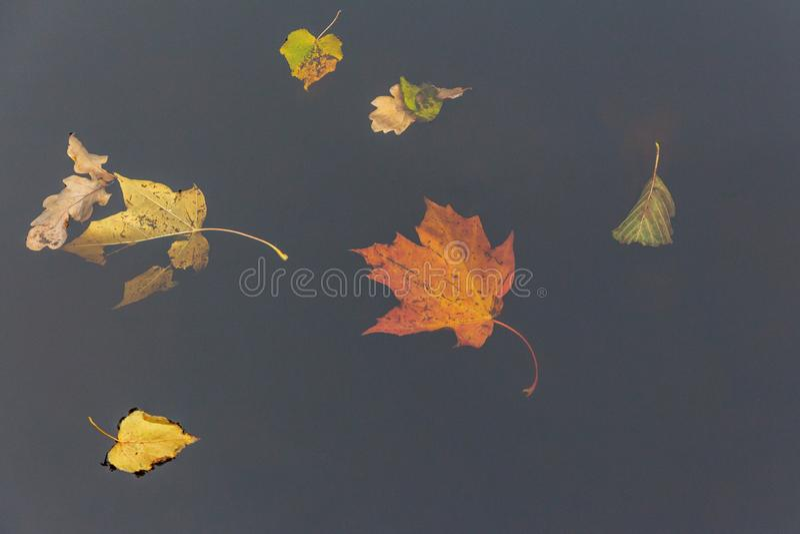 秋天下落的叶子在黑暗的水中 免版税图库摄影